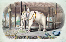 w-elephant-illo